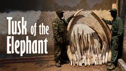 Tusk of the Elephant - Pembe Ya N'Dovu