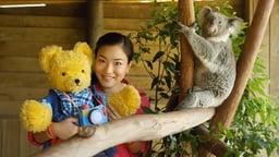 Koalas and Echidnas