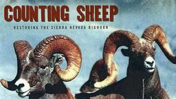 Counting Sheep - Restoring the Sierra Nevada Bighorn