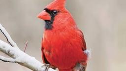 Birding Basics: Bird Origins and Taxonomy