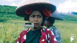 Mastri - A Balinese Woman