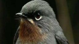 Birds Of Hispaniola, Part 3