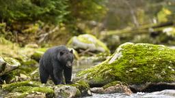 Basics for Wilderness Safety