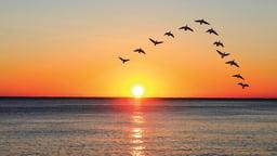 Essentials of Bird Migration