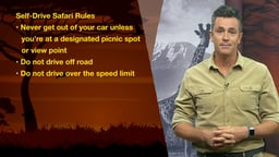 Comparing Self-Drive And Guided Safaris