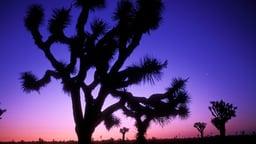 Pinnacles to Joshua Tree: The San Andreas