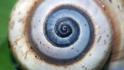 The Joy of Fibonacci Numbers