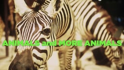 Animals And More Animals