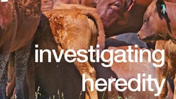 Investigating Heredity