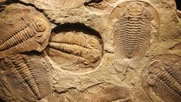 Arthropod Rule on Planet Earth