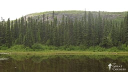 Devonian Death and the Spread of Forests
