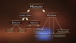 Introduction to Working Memory