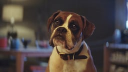 "John Lewis ""Buster the Boxer"""