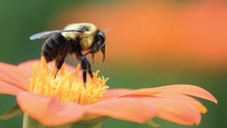 Insects, Plants, and the Rise of Flower Power