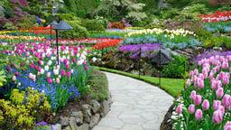 Plan the Garden of Your Dreams
