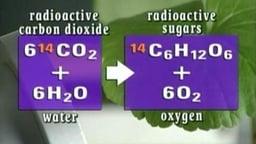 Part 3: Energy Transfer and Biogeochemical