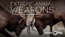 Extreme Animal Weapons
