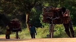 Malawi 2: The Zomba Plateau