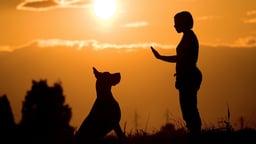 Train Yourself like a Dog