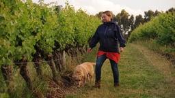 Bio Dynamic Wines