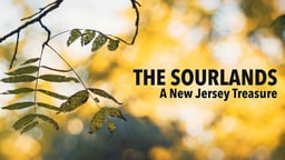 Sourlands - The Fight for Sustainability