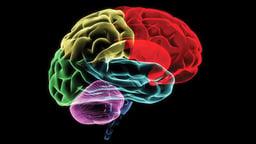 Mindfulness as Brain Training
