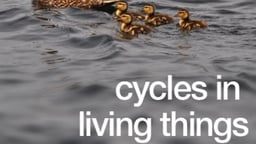 Cycles in Living Things