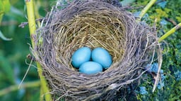 Nests and Eggs: A Home in the Sticks