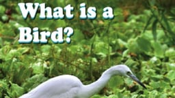 What is a Bird?