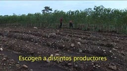 Paths of Hope: Livelihoods in Three Caribbean Communities of Costa Rica, Part 2