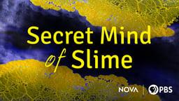 Secret Mind of Slime