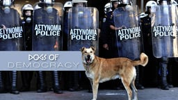 Dogs of Democracy - How Stray Dogs became a Symbol of Hope in Greece