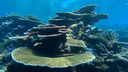 Introduction to Coral Reefs and Climate Change