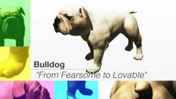 Super Bulldog: From Fearsome To Lovable