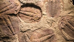 Cambrian Explosion to Dinosaur Extinction
