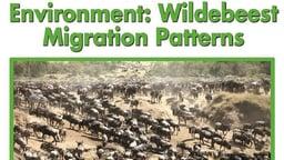 Environment: Wildebeest Migration Patterns