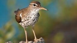 Using Bird Behavior to Identify Birds