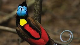 Birds of Paradise: Ultimate Photo Challenge
