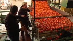 Orange Packing