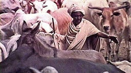 Boran Herdsmen