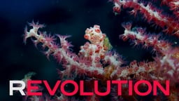 Revolution - The Fight to Save Our Oceans