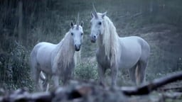 Canal+: Unicorn