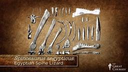 Dinosaur Interpretations and Spinosaurus