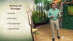Understanding Variations in Plumage