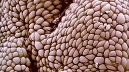 Part 6: Human Digestive System