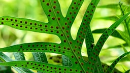 Fern Spores and the Vascular Conquest of Land