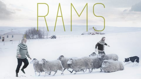 Rams cover image