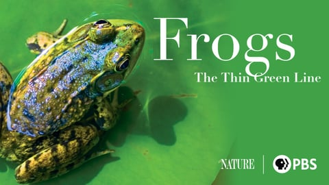 Frogs: The Thin Green Line