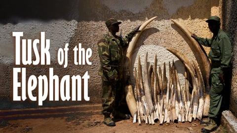 Pembe Ya N'Dovu (Tusk of the Elephant)