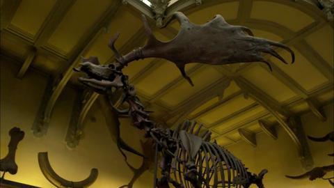 Preview image of Attenborough's Natural Curiosities Episode 6 - Remarkable Regeneration